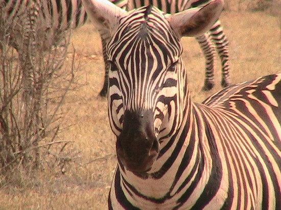 Kenia: t'as de beaux yeux tu sais