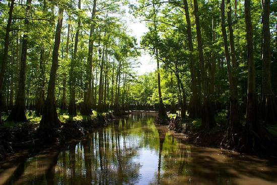 A-Awesome Airboat Rides: Cypress Swamp