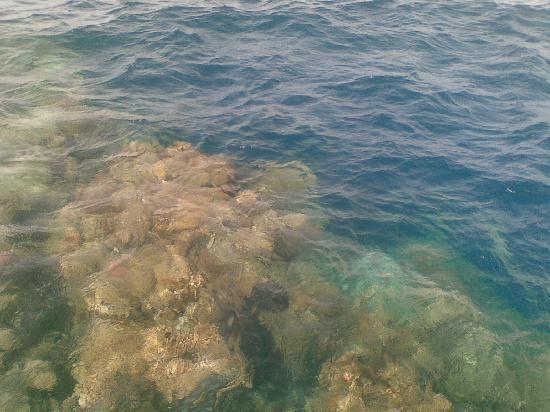 Three Corners Fayrouz Plaza Beach Resort : la barriera dal pontile