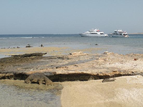 Three Corners Fayrouz Plaza Beach Resort : baia delle tartarughe