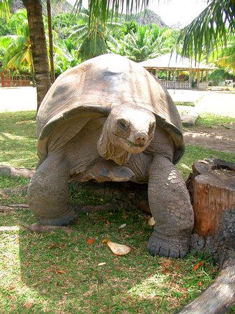 Seychelles: Cuisine Island