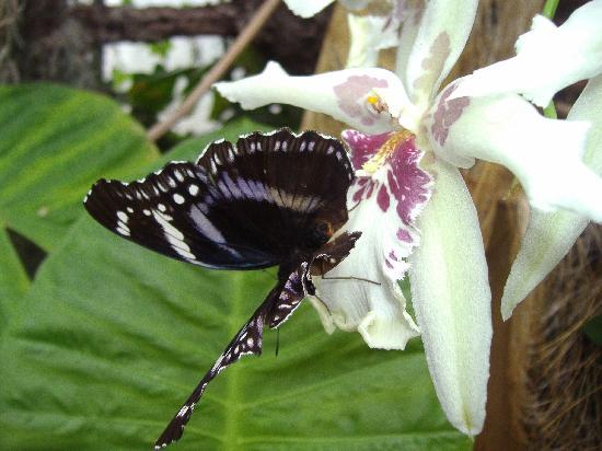 Jardin des Papillons: JARDINS DES PAPILLON - HUNAWIHR, ALSACE, FRANCE