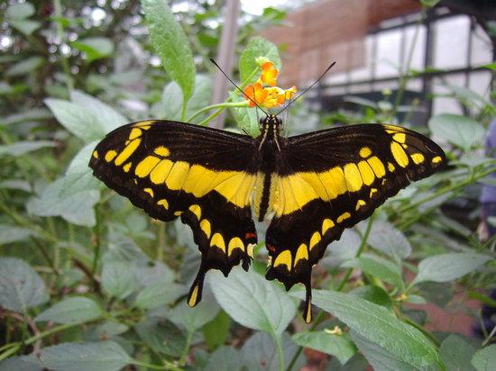 Jardins des Papillons - Hunawihr, Alsace, France