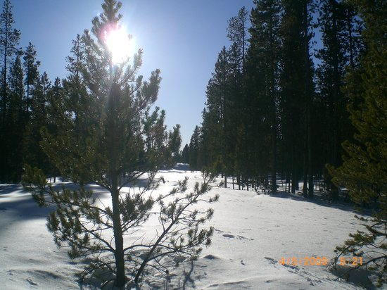 West Yellowstone, MT : Snowmobiling on the trails