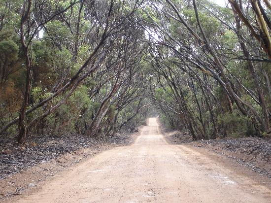 Dirt road to Hanson Bay Cabins