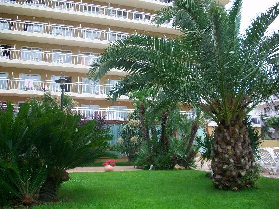 Hotel President: the garden