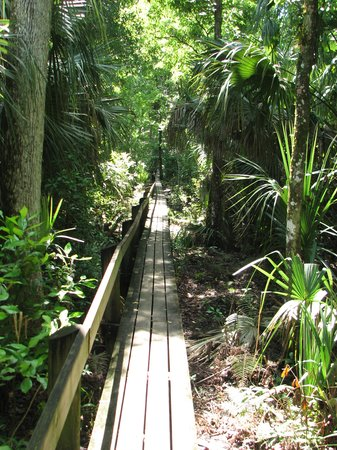 Highlands Hammock State Park: Hickory Trail