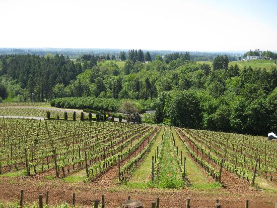 Brookside Inn on Abbey Road: View from Lange winery- close to the inn and one of the best views and pinots