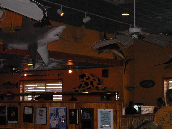Shark cow fish inside the big fish grill picture of for Big fish restaurant