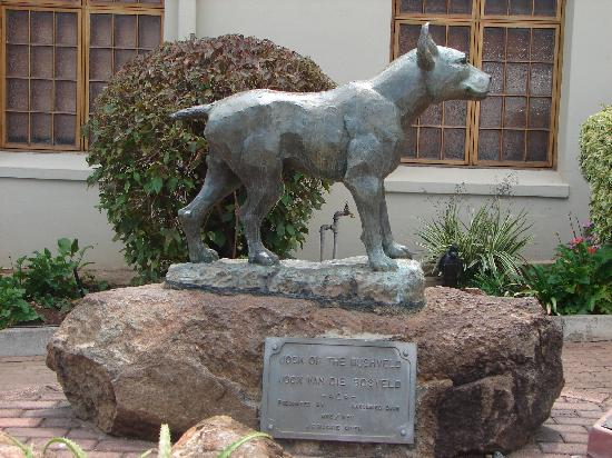 Barberton, Sudáfrica: Jock of the Bushveld statue