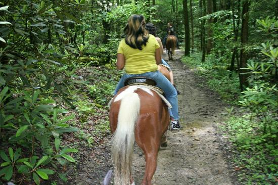 Smoky Mountain Riding Stables: On the trail ( our own picture)