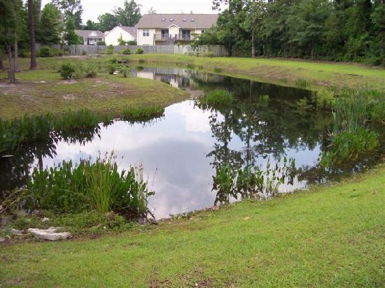 Comfort Suites: This is the pond behind the pool with frogs.