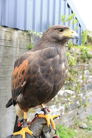 Ireland's School of Falconry: The first time I had a hawk perched on my hand