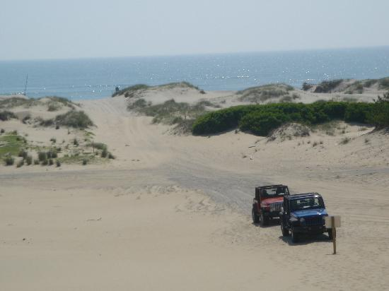 Wild Horse Adventure Tours: on top of the dune