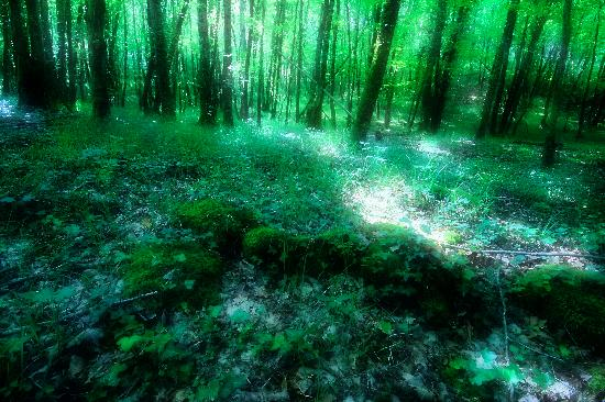 Siorac-en-Perigord, France: Ethereal woods