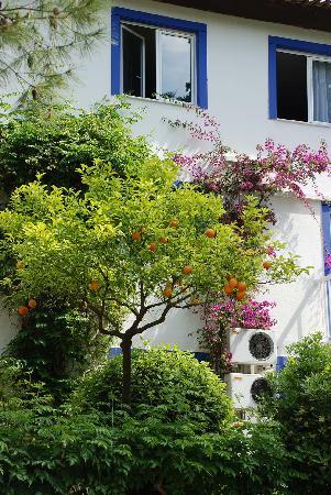 Club Med Gregolimano: Jardin
