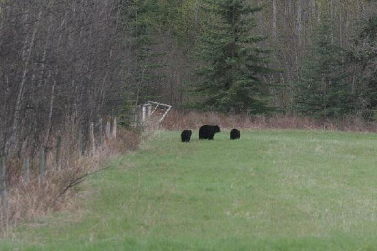 Logpile Lodge : Bear with 2 cubs