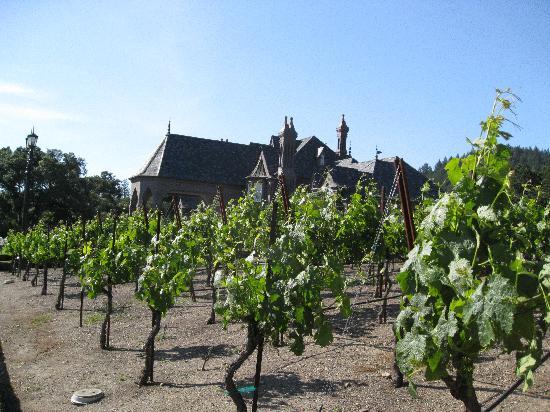Geyserville Inn: Vineyards