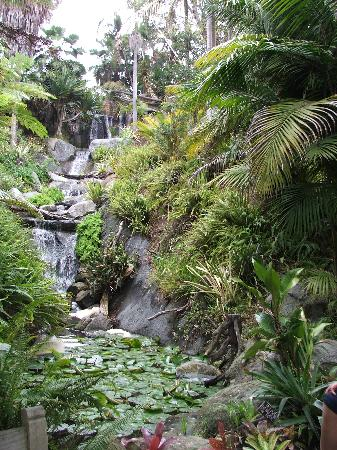 San Diego Botanic Garden: Waterfall At The Rain Forest Section