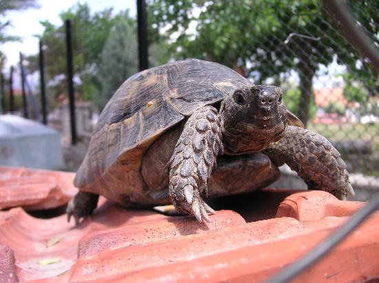 Downtown Fethiye: Local slow wild life