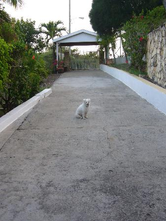 "Ocean Inn: Mike the ""guard dog"""