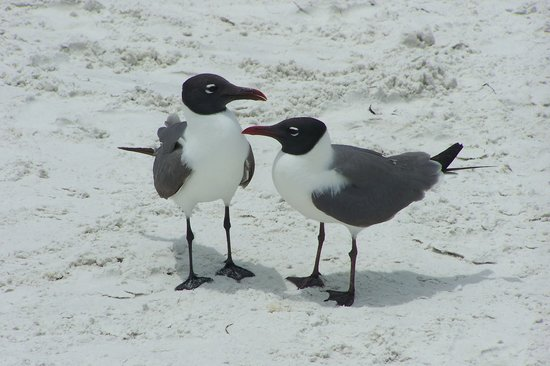 Siesta Key, Floryda: BIRD TALK
