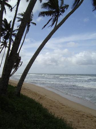 The Frangipani Tree by Edwards Collection: The beach - quiet and ideal for walking
