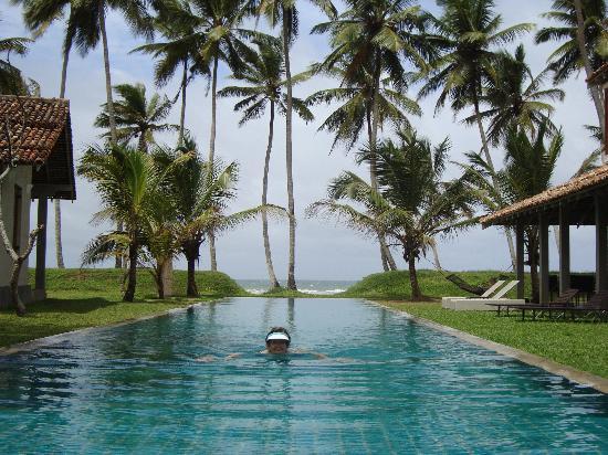Frangipani Tree: The pool - all to myself!!!