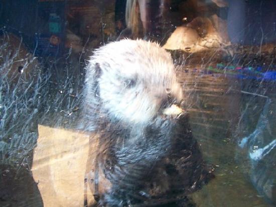 River Otter Picture Of Georgia Aquarium Atlanta