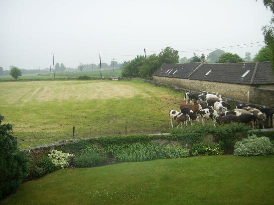 Pickwick Lodge Farm B&B : view from room