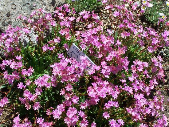 Yampa River Botanic Park: Flowers