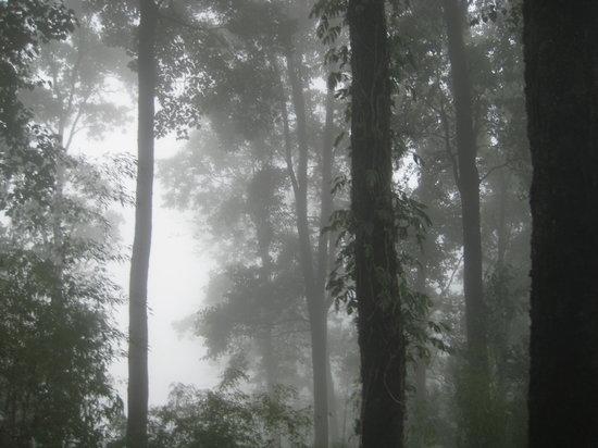 Sikkim, Indien: Nature
