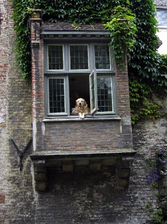 "Huyze Hertsberge: The famous resident doggie star of film ""In Bruges"""