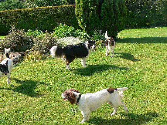 Greenacre Bed and Breakfast : Ben, Finn with their two guests in the garden
