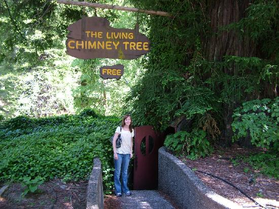 Avenue of the Giants: The Living Chimney Tree