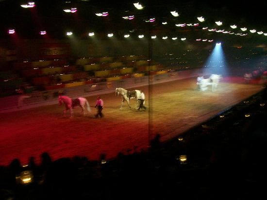 Medieval Times Dinner & Tournament: they put on an awesome show
