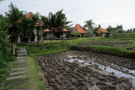 Sitara Padi Villas: massage bale in foreground