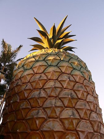 Nambour, Australië: The BIG Pineapple