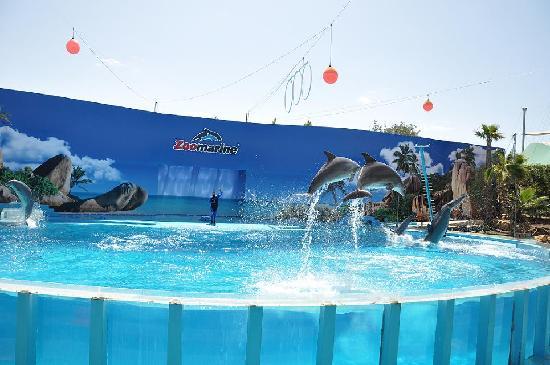 Alpinus Hotel: zoomarine dolphin show