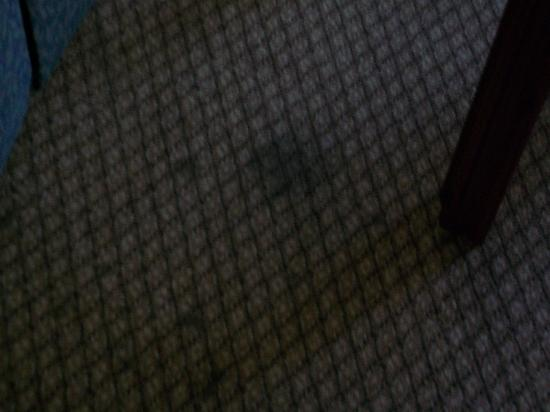 Hampton Inn Nashville / Vanderbilt: terribly spotted and dark stained carpet