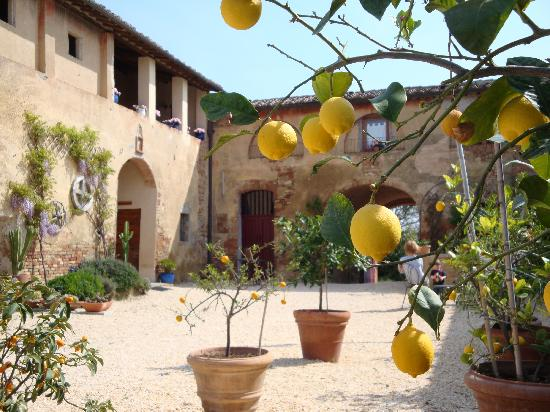 Agriturismo Marciano: view to Marciano via the lemon trees