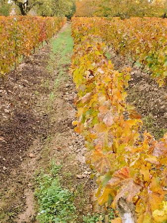 Finca Adalgisa Wine Hotel, Vineyard & Winery: Vineyards at Finca Adalgisa