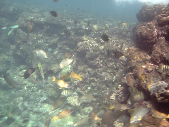 Island Magic Resort: Fish & reef below jetty
