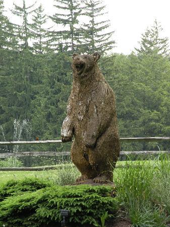 Bischwind: Bear at Bear Creek