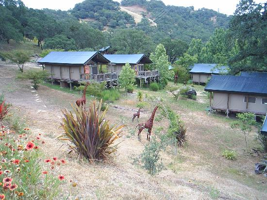 Safari west lodging pictures to pin on pinterest pinsdaddy for Lion country safari cabins