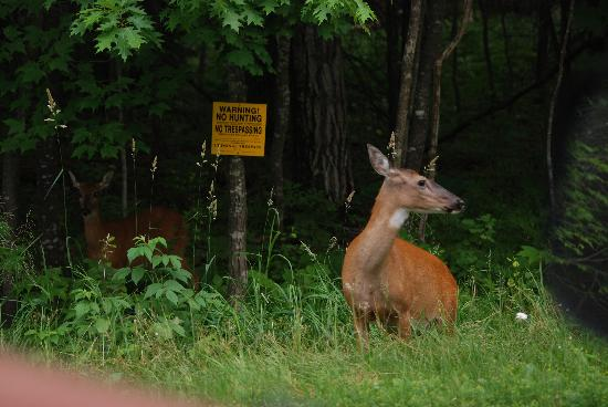 Port Wing, WI: Deer with an attitude