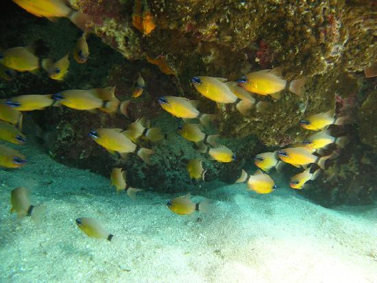 Matafonua Lodge : more coral and fish