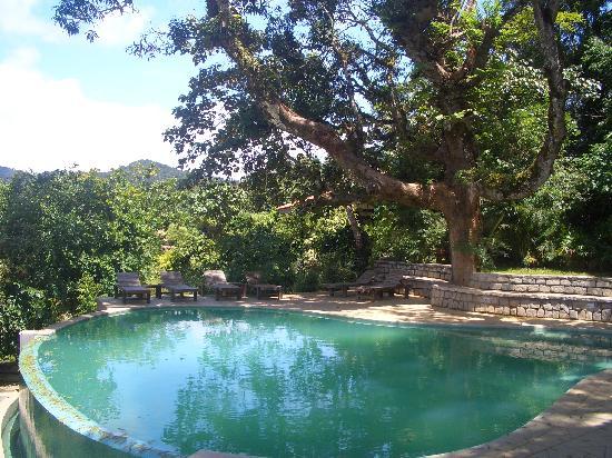 Mudigere, Índia: swimming pool