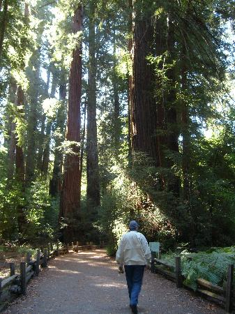 Henry Cowell Redwoods State Park: Flat, easy .8 mile loop around the giant redwoods