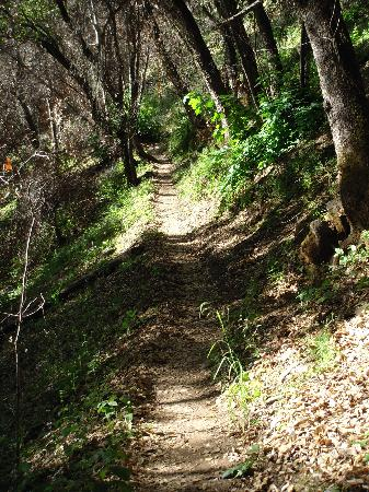 Tassajara Zen Mountain Center: Path up the hillside outside the main area, lots of great walks and hikes